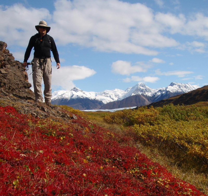 Fall colors while hiking in Skolai Pass